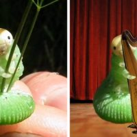 funny-caterpillar-photoshop-battle-fb5__700-png